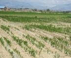 维权案例4:问题种子出问题,消费者获赔6千