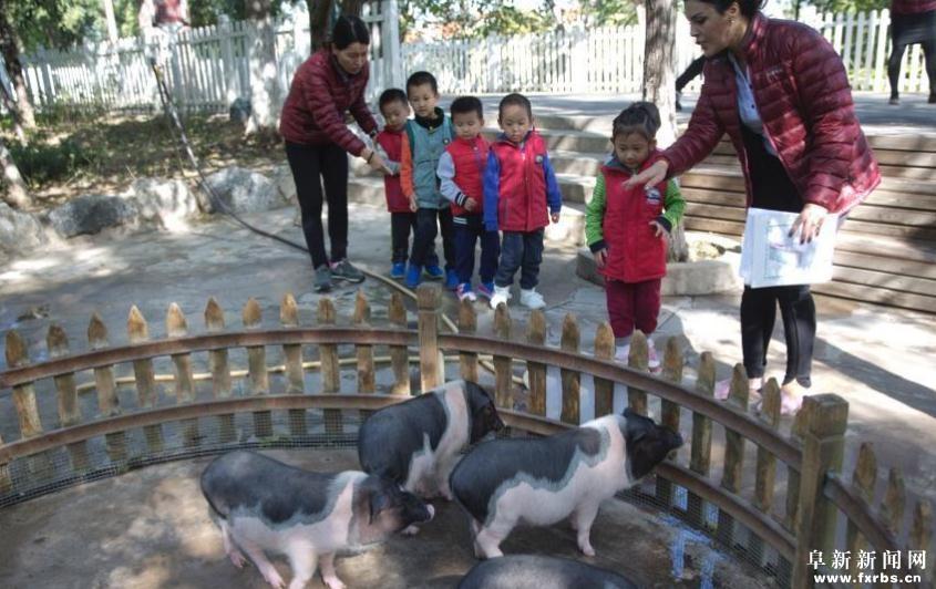 北京某幼儿园建动物园
