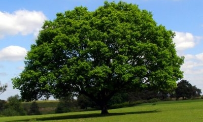 """【书香sbf888•为你读书】动心泪目!""""春天的诗会""""朗诵音乐会展播——《致橡树》 ... ..."""