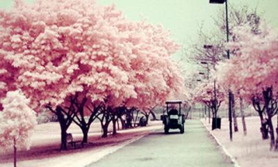 """【书香sbf888•为你读书】动心泪目!""""春天的诗会""""朗诵音乐会展播——《一棵开花的树》 ..."""