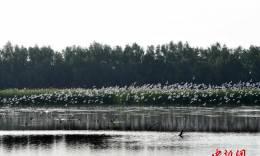 大批候鸟飞临广州过冬