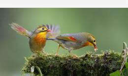 此鸟最相思