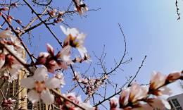 春风十里桃花开
