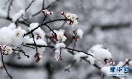 雪后花海 梯田仙境