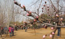 春季赏花期到啦,去哪儿?看这!