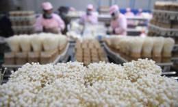 江苏泗阳:小菌菇 大产业