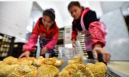 猴头菇种植助增收